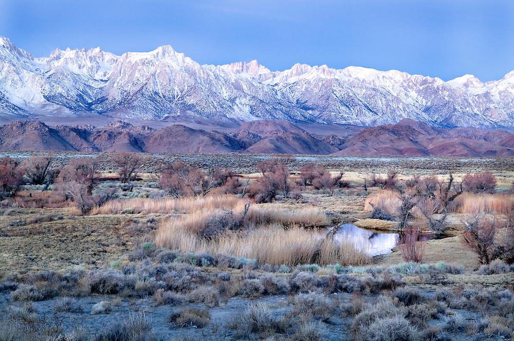 Winter Pre Dawn Pond and Owens Valley Beneath the Sierra Nevada Mt., CA.