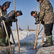 """Buryati ice fishermen in Selenga in the Kabansk region catching fish using horses on the ice at Russia's Lake Baikal. Crowned the """"Jewel of Siberia"""", Baikal is the world's deepest lake, and the biggest lake by volume, holding 20% of the world's fresh water. In the winter, the lake 31,722 square meter surface is entirely frozen with ice averaging 2 meters thick."""