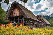 """Gassho-zukuri farmhouses with red & orange flowers. Ogimachi is the largest village and main attraction of the Shirakawa-go region, in Ono District, Gifu Prefecture, Japan. Declared a UNESCO World Heritage Site in 1995, Ogimachi village hosts several dozen well preserved gassho-zukuri farmhouses, some more than 250 years old. Their thick roofs, made without nails, are designed withstand harsh, snowy winters and to protect a large attic space that was formerly used to cultivate silkworms. Many of the farmhouses are now restaurants, museums or minshuku lodging. Some farmhouses from surrounding villages have been relocated to the peaceful Gassho-zukuri Minka-en Outdoor Museum, across the river from the town center. Gassho-zukuri means """"constructed like hands in prayer"""", as the farmhouses' steep thatched roofs resemble the hands of Buddhist monks pressed together in prayer."""