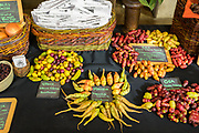 Andean Tubers<br /> Showcase: Yacon and Oca<br /> Breeders: Dylana Kapuler & Mario DiBenedetto, Peace Seedlings