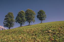 THEMENBILD - Laubbäume in einer Reihe auf einer Wiese, aufgenommen am 29. Septembert 2019 in Saalfelden, Oesterreich // Deciduous trees in a row on a meadow, in Saalfelden in Austria on 2019/09/29. EXPA Pictures © 2019, PhotoCredit: EXPA/Stefanie Oberhauser