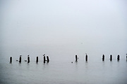 © Licensed to London News Pictures. 14/04/2015. Seaford, UK. Seabirds float on the calm waters in the sea mist. People in the early morning sea mist and sunshine in Seaford today 14th April 2015. Today is expected to be a very warm day across Britain. .. Photo credit : Stephen Simpson/LNP
