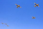 Israeli Air force C-130 Hercules 100 transport plane in flight