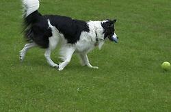 Eddie Sander with his Dogs Jackson and Inka<br /><br />18 June 2004<br /><br />Copyright Paul David Drabble<br /> [#Beginning of Shooting Data Section]<br />Nikon D1 <br /> Focal Length: 80mm<br /> Optimize Image: <br /> Color Mode: <br /> Noise Reduction: <br /> 2004/06/18 09:51:22.5<br /> Exposure Mode: Manual<br /> White Balance: Auto<br /> Tone Comp: Normal<br /> JPEG (8-bit) Fine<br /> Metering Mode: Center-Weighted<br /> AF Mode: AF-C<br /> Hue Adjustment: <br /> Image Size:  2000 x 1312<br /> 1/250 sec - F/6.3<br /> Flash Sync Mode: Not Attached<br /> Saturation: <br /> Color<br /> Exposure Comp.: 0 EV<br /> Sharpening: Normal<br /> Lens: 80-200mm F/2.8<br /> Sensitivity: ISO 200<br /> Image Comment: <br /> [#End of Shooting Data Section]