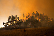 HEALDSBURG, CA - OCTOBER 26: A firefighter watches over a back fire along a hillside during firefighting operations to battle the Kincade Fire in Healdsburg, California on October 26, 2019.