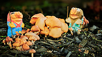 Troll Mushroom Farmers. Composite of 50 focus stacked images taken with a Nikon D850 camera and 105 mm f/1.4 lens (ISO 64, 105 mm, f/1.4, 1/80 sec). Raw images processed with Capture One Pro and Focus Magic.