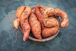 Ipomoea batatas 'Beauregard' - Sweet potato