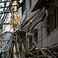 Asia, India, Delhi. Wires of Chandni Chowk, and resident monkey.