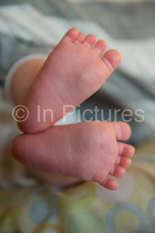One month old baby's feet