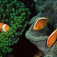 Coral Reef Color