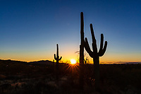 Family Vacation to Phoenix Arizona<br /> <br /> ©2018, Sean Phillips<br /> http://www.RiverwoodPhotography.com