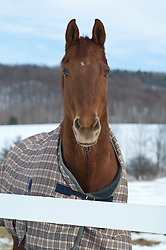 horse with a beautiful blanket on in the Wintertime