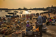 Fishermen sell their daily catch in Vizhinjam harbour 28th February 2018 in Kovalam, Kerala, India.