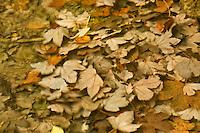Underwater leaves, Plitvice National Park, Croatia