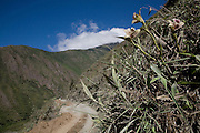 An orchid on the mountain side adjacent to the Interoceanic Highway where Rosa Maria Roman-Cuesta searches for further species in the distance. This part of the mountain side was due for dynamiting the following week to enlarge the road.