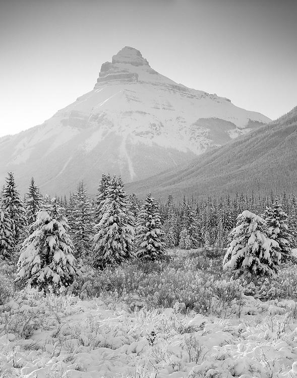 Pilot Mountain in Winter, Banff National Park
