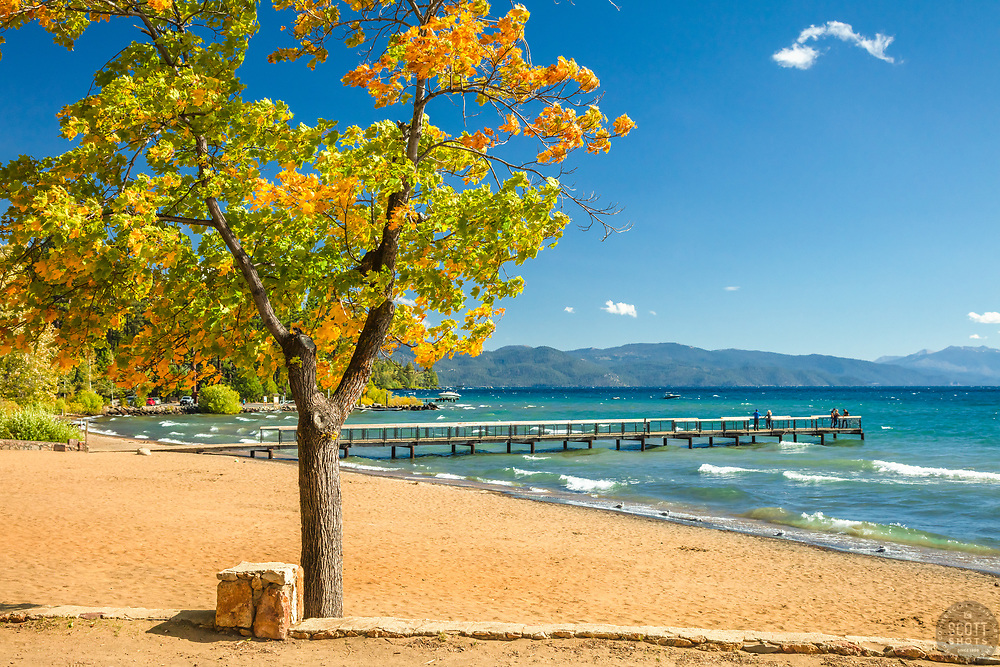 """""""Autumn Tree at Kings Beach 2"""" - Photograph of a tree with fall colored leaves along the shore of Kings Beach, Lake Tahoe."""