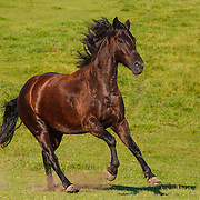20110729 Warmblood Horses