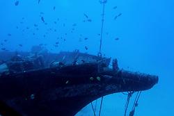 Fish Swimming by Shipwreck