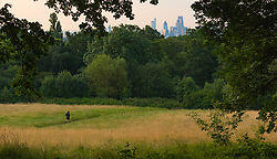 Hampstead Heath, London, July 20th 2016. The skyscrapers of tThe City seem a long way from the early morning tranquility of Hampstead Heath as London prepares for another hot summer's day. ©Paul Davey<br /> FOR LICENCING CONTACT: Paul Davey +44 (0) 7966 016 296 paul@pauldaveycreative.co.uk