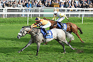 MAJOR JUMBO (4) ridden by Josephine Gordon and trained by Kevin Ryan winning The Coral Sprint Trophy over 6f (£100,000)   during the October Finale meeting at York Racecourse, York, United Kingdom on 13 October 2018. Pic Mick Atkins