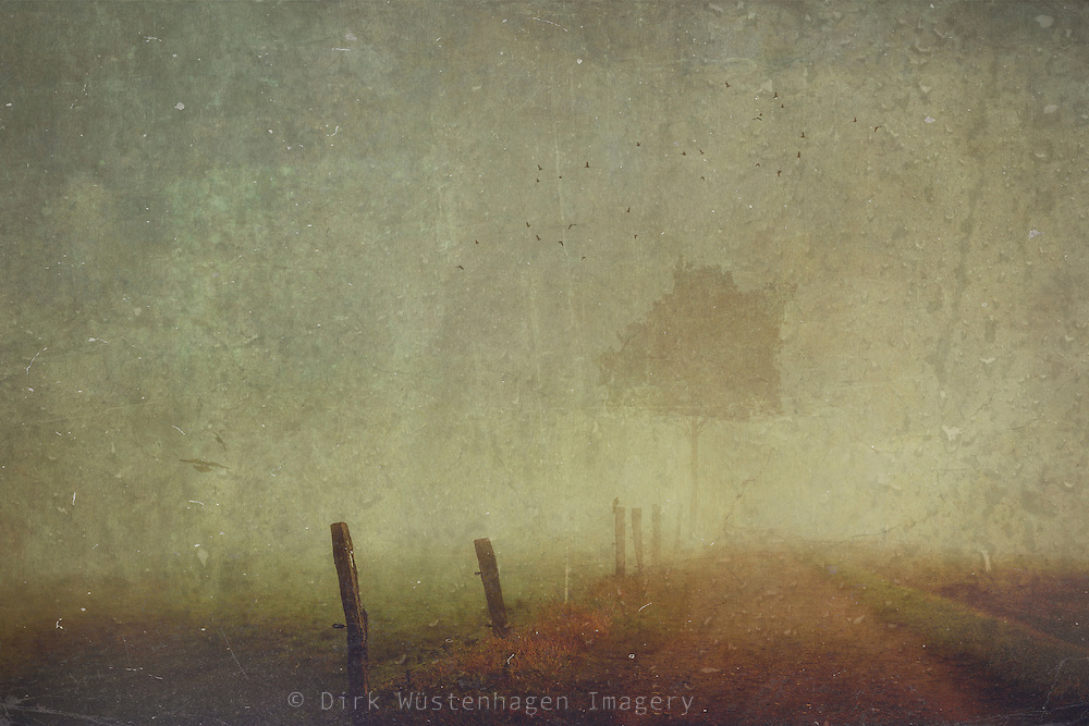 Country road on a rainy and foggy fall morning with crows and a solitary tree - texturized manipulated photograph