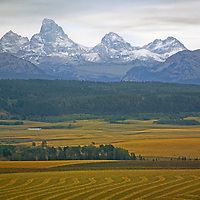 A view of farmland and distant snowcapped mountains.
