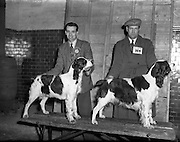 """28/12/1952<br /> 12/28/1952<br /> 28 December 1952<br /> Dog Show, Dublin Society at Portabello Barracks,Robert Kirkland, Newry with his English Springer """"Diamond of Downshire"""", Green Star and best of breed and John Barker, Co. Tyrone with his English Springer """"Shot of Lissen"""", Reserve Green Star at show."""