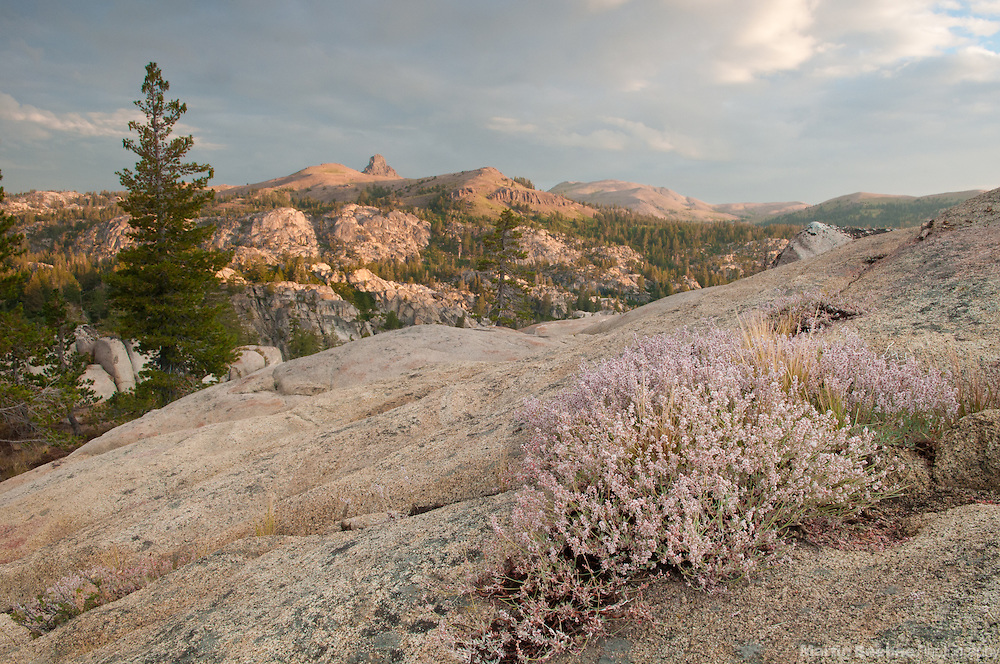 Morning alpenglow, with Jeff Davis Peak in the background, Sierra Nevada, Toiyabe National Forest, California