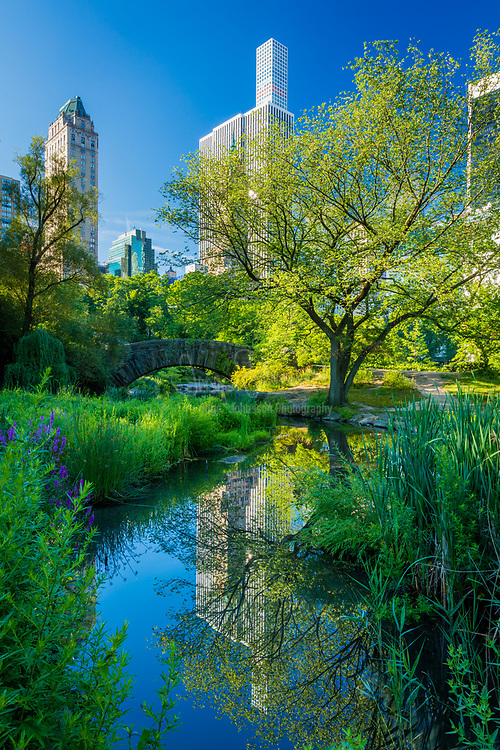 The Pond and Hallett Nature Sanctuary occupy the low-lying southeast corner of New York City's Central Park, at the corner of Grand Army Plaza, across Central Park South from Plaza Hotel, and abutting Fifth Avenue. The simple fieldstone arch of Gapstow Bridge was built in 1896 to replace the original more ambitious but less rustic structure designed by Jacob Wrey Mould. As originally laid out by Frederick Law Olmsted and Calvert Vaux, the Pond was considerably larger. A large piece of its upper reaches, beyond Gapstow Bridge, once spanning a narrow neck of water, was paved over to form the Wollman Memorial Skating Rink, opened in 1949. Nearby, on stone plinths, bronze busts commemorate the poet Thomas Moore and the composer Victor Herbert (by Edmond Thomas Quinn).