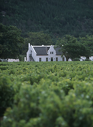 Looking across vineyard (Credit Image: © Axiom/ZUMApress.com)