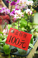 Great deals on beautiful orchids can be found at the Taipei Flower Market.
