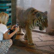 NL/Amersfoort/20200813 -  Bilal Wahib schept tijgerpoep in de  dierentuin,