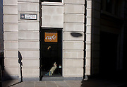 A man stretches in the sunlight window of a City cafe on King William Street in the City of London, the capital's financial district and oldest quarter.