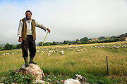 A Shepherd with his flock of sheep. Photographed in Umbria, Italy