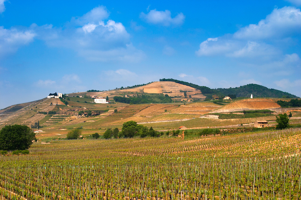 A view over the Crozes-Hermitage vineyards in the part of the appellation closes to Hermitage. On slopes with stone terraces. In the background the Hermitage hill with the white Maison Blanche house, La Croix and Les Murets vineyards  Crozes Hermitage, Drome, Drôme, France, Europe