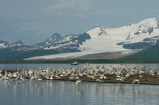 Boat in Katmai National Park. Alaska.