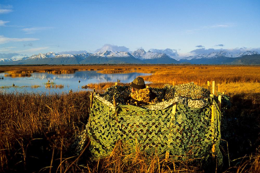 Alaska, Kenai Peninsula. Duck hunter, blind and decoys. MR