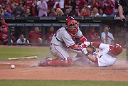 16 May 2011                              St. Louis Cardinals second baseman Nick Punto (8) was safe at home plate after Philadelphia Phillies catcher Carlos Ruiz (51) dropped the ball while trying to put the tag on him in the seventh inning. The St. Louis Cardinals defeated the Philadelphia Phillies 3-1 on Monday May 16, 2011 in the first game of a two-game series at Busch Stadium in downtown St. Louis.