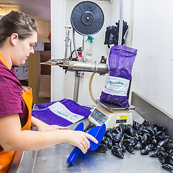 Micki Beal (owner Ralph Smith's granddaughter) bags mussels at Moosabec Mussels, Inc., in Jonesport, Maine.