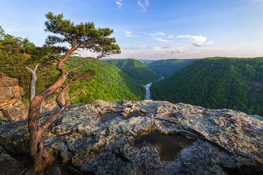 Along the clifflines of Beauty Mountain, a stunted pine gestures toward the wide open landscape as if to introduce visitors to the New River Gorge of West Virginia, covered by the fresh greens of Spring.