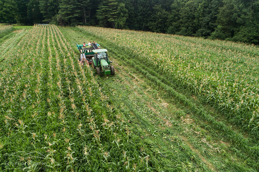 The corn harvest at Pearl Farm in Loudon, New Hampshire.