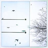 ALTONA 10                                            Hamburg Homage Serie ALTONA 2015.                                                  C-Print auf eine MDF-Platte mit einer Stärke von 5 mm gebracht und mit einer besonderen Schicht aus Wachs versiegelt.<br /> Format: 20 cm x 20 cm. 30 cm x 30 cm. 60 cm x 60 cm.<br /> Limitierte Edition von 99 ist vom Künstler handsigniert und nummeriert.                           ©Nero Pécora