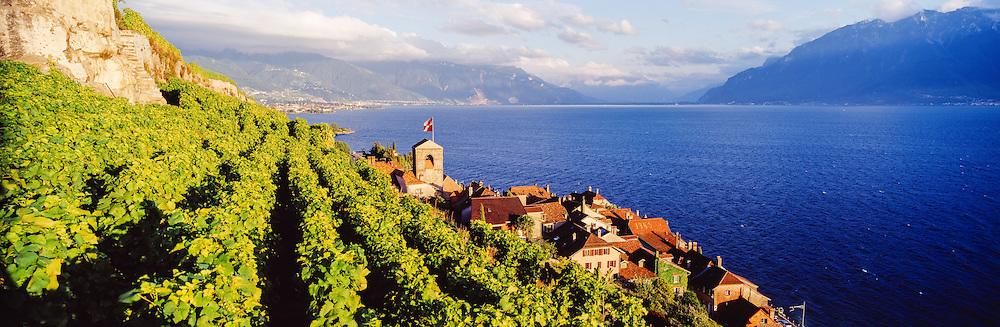 View of the vinyards of the famous Saint-Saphorin village, french riviera, Leman Lake, Switzerland