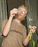 British herpetologist Mark O'Shea milks the venom of a Sunda Island pitviper, Cryptelytrops insularis, at Bakhita Mission, near Eraulo, Ermera District, Timor-Leste (East Timor)