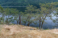 Garry Oak (Quercus garryana) trees growing along the shoreline at Burgoyne Bay. Photographed from Daffodil Point in Burgoyne Bay Provincial Park on Salt Spring Island, British Columbia, Canada