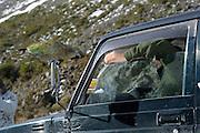 Kea (Nestor notabilis) Arthur's Pass, New Zealand | Kea oder Bergpapagei (Nestor notabilis) - Keas werden immer wieder gefüttert, auch wenn es die Tiere davon abhält selber auf Nahrungssuche zu gehen. Arthur's Pass, Neuseeländische Alpen, Neuseeland.