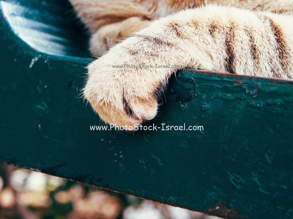 Close up of a cat's paw