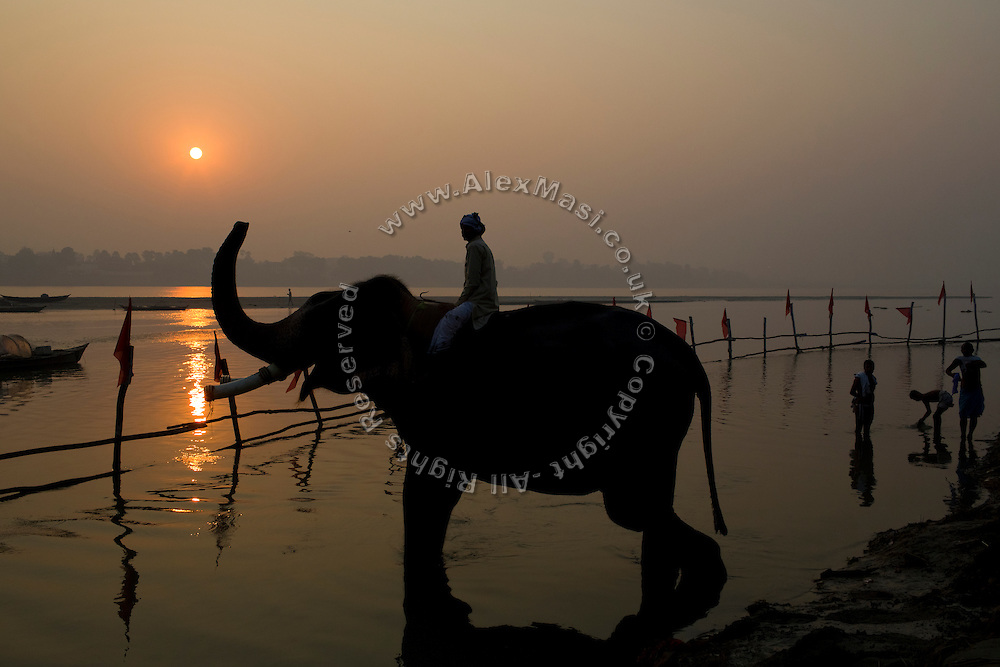 Hindu devotees are about to bath in the holy Ganges River, while an elephant and his handler are saluting the rising sun during the yearly Sonepur Mela, Asia's largest cattle market, in Bihar, India.