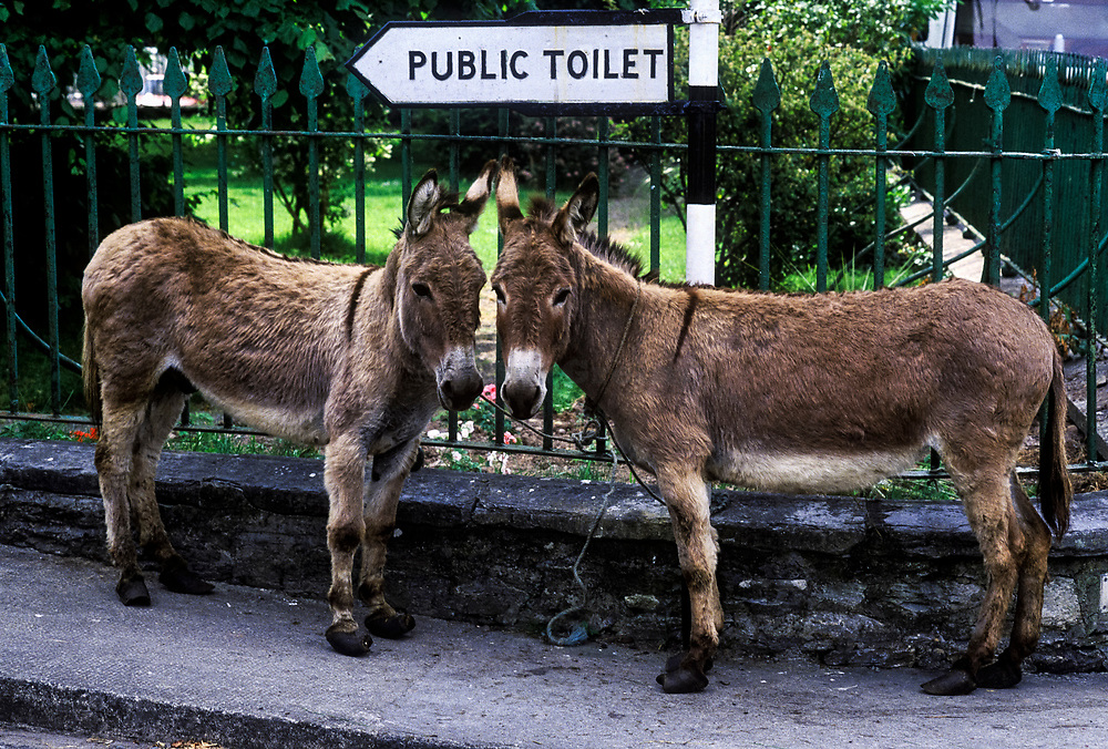 Two donkeys by a public toilet sign, Ireland